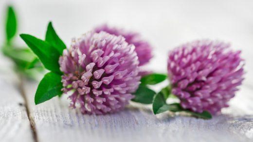 Клеверол это препарат содержащий фитоэстрогены. Является безопасным аналогом заместительной гормональной терапии. Устранить симптомы и сохранить здоровье