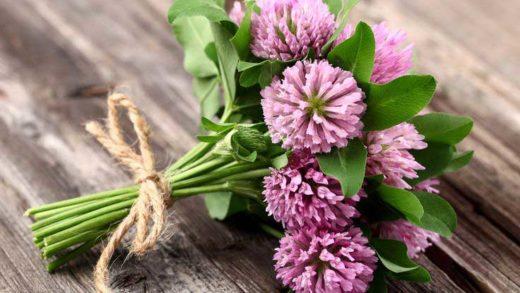 Красный клевер — уникальное лекарственное растение. Его применяют в медицине и кулинарии. В этой книге мы расскажем об альтернативных способах его применения.